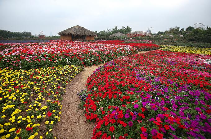Thung lũng hoa tỏa sắc giữa Thủ đô