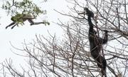 Đàn tinh tinh săn giết khỉ trong công viên Tanzania