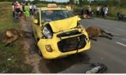 Taxi Äâm chết 3 con bò tại Phú Quá»c, ai Äá»n ai?