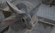 Đàn thỏ nghìn con uống nước lọc 3 cấp phòng bệnh đường ruột
