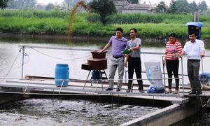 Nửa năm thu lời một tỷ nhờ tạo 'sông trong ao' để nuôi cá
