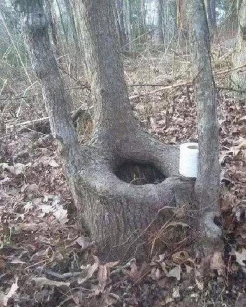 Nhà vệ sinh thiên nhiên.