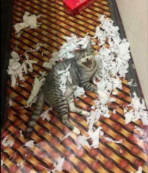 Nỗi ám ảnh khi nuôi mèo.