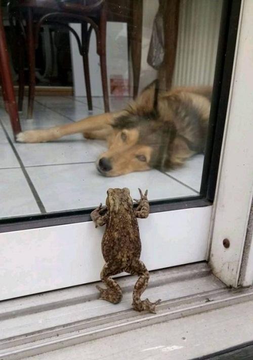 Người bạn mới ghé thăm.