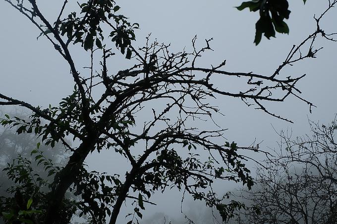 Mận rụng như trải thảm sau mưa đá ở Sơn La