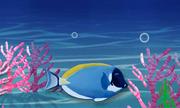 Cách ngủ của cá dưới lòng đại dương