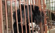 Phim kêu gọi cộng đồng không sử dụng mật gấu