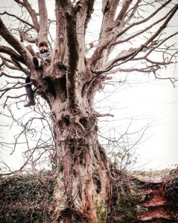 Con trai tôi đang dùng Twitter ở trên cây, tài khoản Clair chia sẻ. Ảnh: Twitter