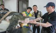 Nỗ lực bảo tồn hai con rùa quý hiếm nhất thế giới ở Trung Quốc