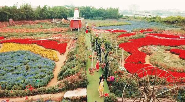 Thung lũng hoa rộng 70 ha ở Hà Nội