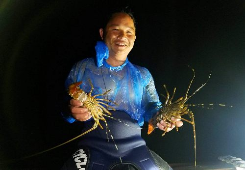 Ngư dân Huế lặn biển bắt tôm hùm con