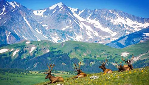 Triệu phú Mỹ chôn kho báu trên núi khiến hàng trăm nghìn người săn tìm