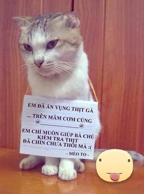 Làm mèo tốt thật khó.