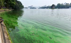Lớp váng màu xanh ở hồ Hoàn Kiếm 'không phải tảo nở hoa'
