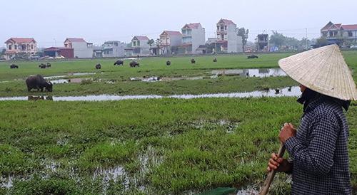 Nhiều nông dân xã Thiệu Dương bức xúc vì bị thu phí chăn thả gia súc. Ảnh: Lam Sơn.