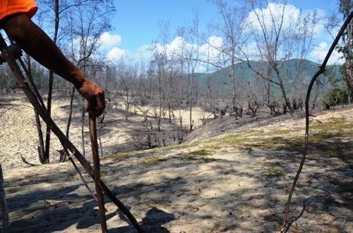 Rừng dương liễu ở khu vực triển khai dự án bị cháy hoang tàn. Ảnh: Phạm Linh.