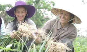 Nông dân 'tự chế' thuốc trừ sâu cho cây tỏi
