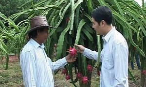 Thu 1,8 tỷ đồng mỗi năm nhờ 10 ha cây ăn quả