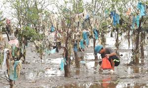 Hơn 100 ha rừng phòng hộ ven biển Thanh Hoá phủ đầy rác thải