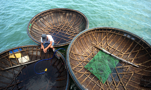 Ngư dân Quảng Nam câu mực thu hơn 5 tỷ đồng
