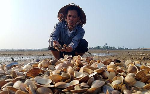 Người nuôi trồng thủy sản ở huyện Cẩm Xuyên buồn bã vì ngao chết hàng loạt vào ba tuần trước. Ảnh: Đức Hùng