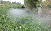 Nông dân phun thuốc diệt lục bình dày đặc trên sông
