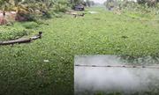 Tại sao dân lại phun thuốc diệt lục bình làm ảnh hưởng môi trường?