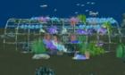 New York nhấn chìm xác cầu làm nơi ở cho động vật biển