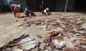 Ngư dân Quảng Nam thu hơn 5 tỷ đồng cho một chuyến câu mực