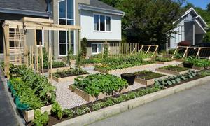 Cặp vợ chồng Canada tiết kiệm 1.500 USD mua rau nhờ tự trồng