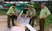 Xe container chất đầy 5 tấn nầm lợn hôi thối