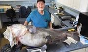 Cá nheo lục nặng 55 kg cắn câu ngư dân Mỹ