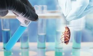 Công nghệ AI giúp Trung Quốc nuôi 6 tỷ con gián làm dược liệu