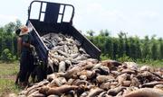 Hàng chục tấn cá chết trắng hồ thủy lợi ở Bình Phước