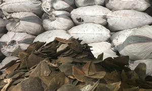4 tấn nghi vảy tê tê ngụy trang trong hai container gỗ