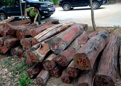 Tạm giữ gần 40 m3 gỗ quý trong rừng quốc gia Yok Đôn