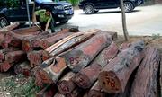 Hai xe tải chở gần 40 m3 gỗ quý từ Vườn quốc gia Yok Đôn