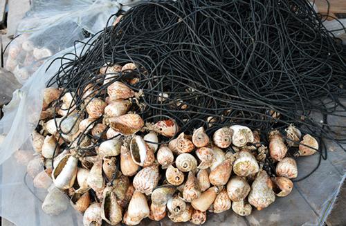 Nạn trộm ngư cụ hoành hành trên biển Cà Mau