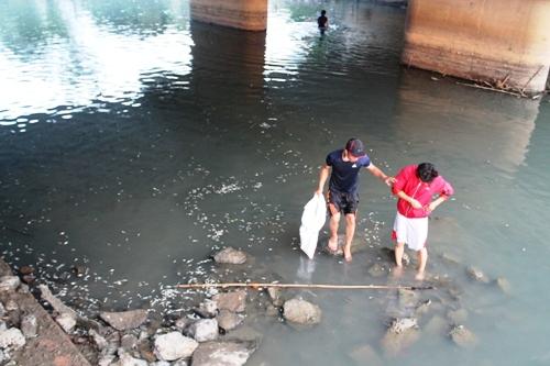 Cá chết nổi trắng sông ở Quảng Ngãi