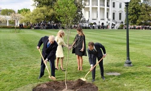 Tổng thống Mỹ Trump vàTổng thống Pháp Macron trồng cây sồi tại Nhà Trắng ngày 23/4. Ảnh: TNS.