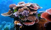 Australia chi gần nửa tỷ USD để bảo vệ và phục hồi san hô