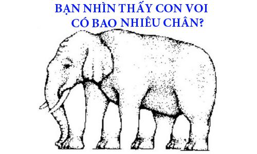 70-nguoi-khong-dem-duoc-con-voi-co-bao-nhieu-chan-con-ban