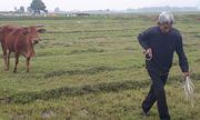 Thanh Hoá kiểm điểm sai phạm vụ thu phí đồng cỏ
