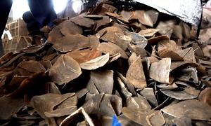Hơn 3 tấn vảy tê tê giấu trong container ở Sài Gòn