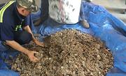 Container chứa vảy tê tê dán mác hạt điều về Việt Nam