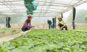 Kỹ sư nông nghiệp hướng dẫn cách trồng rau hữu cơ