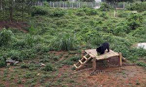 Hai gấu ngựa hồi phục sức khỏe sau 10 ngày được giải cứu