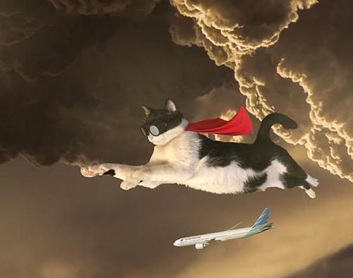Mèo anh hùng đến giải cứu trái đất đây.