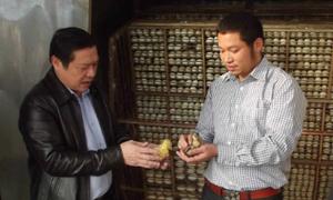 'Cao thủ' nuôi đàn vịt trời vạn con ở Bắc Ninh