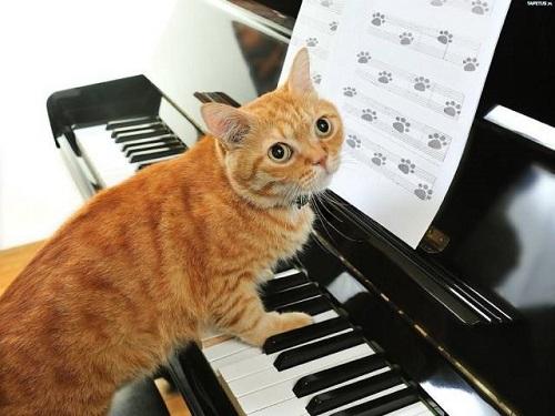 Nhạc phổ dành cho mèo.